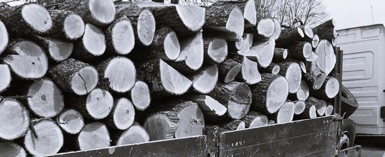 """""""Mafia lemnului"""", prinsă în flagrant la Mureș: 830 mc de material lemnos, expediat fără avize de însoțire"""