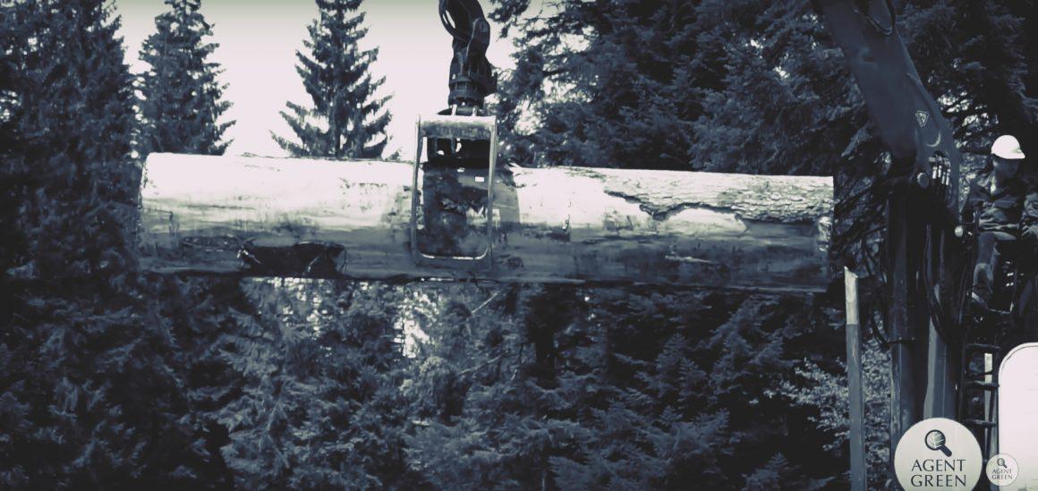 Cazul masacrării pădurilor seculare din Bucegi ajunge la DNA