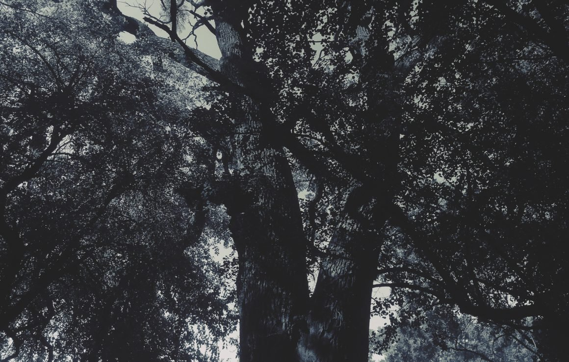 Un proiect legislativ propune protejarea arborilor seculari