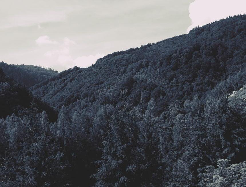 """USR-PLUS: """"DNA-ul Pădurilor trebuie înființat de urgență"""""""